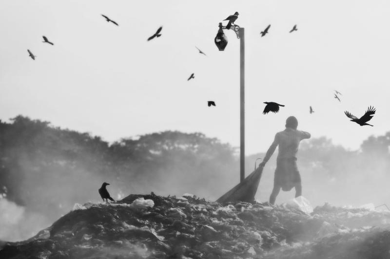 Attack of birds