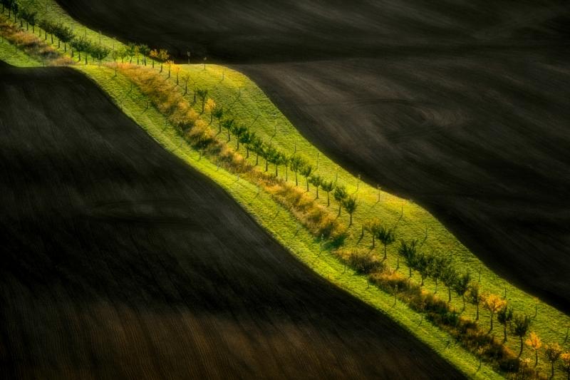 Moravian ribbon