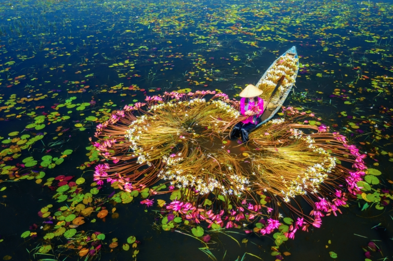 Bring water lilies onto the boat