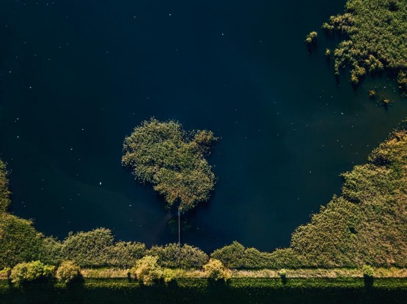 Tree or Island?