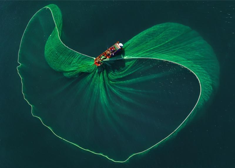 The lotus leaf