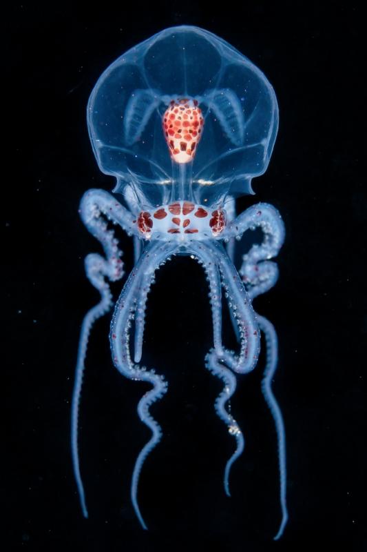 Alien Dancer