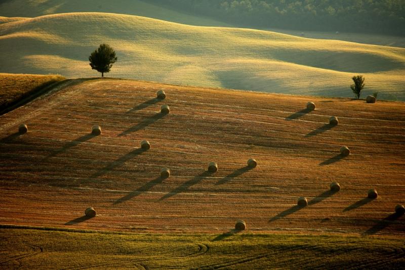 Sienese Countryside