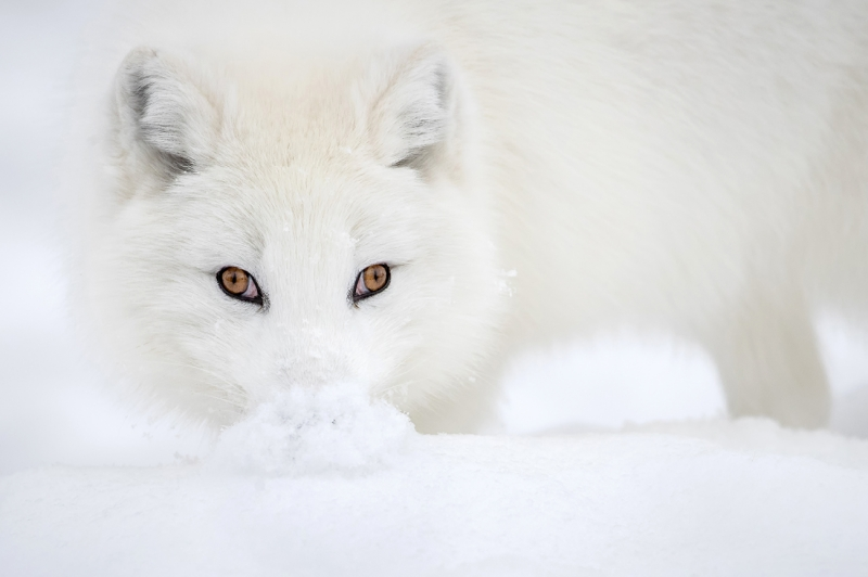 Snow Monalisa