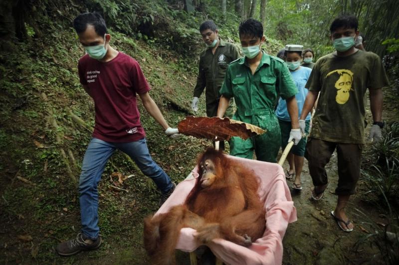 Saving Orangutans 3