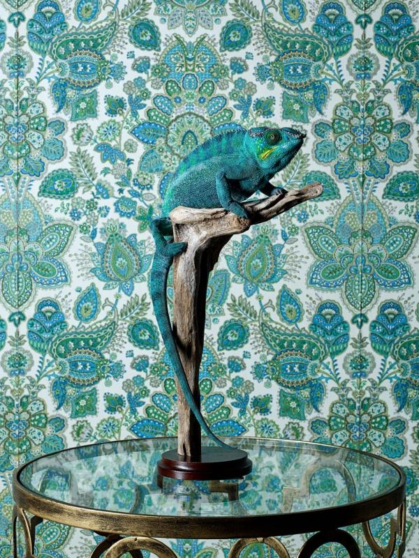 Chameleon in the Bedroom