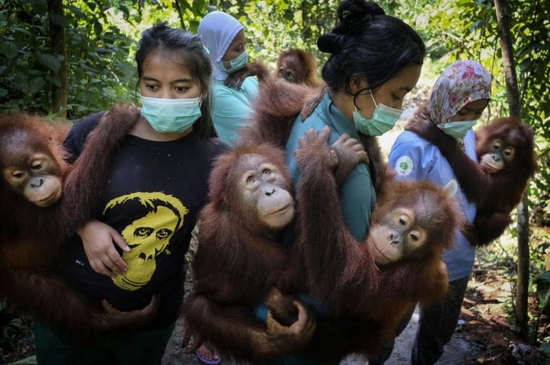 Saving Orangutans 5
