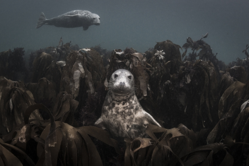 Throne of Kelp