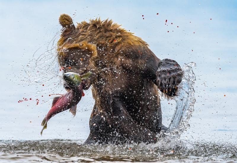 Bear-Spoilt Eggs