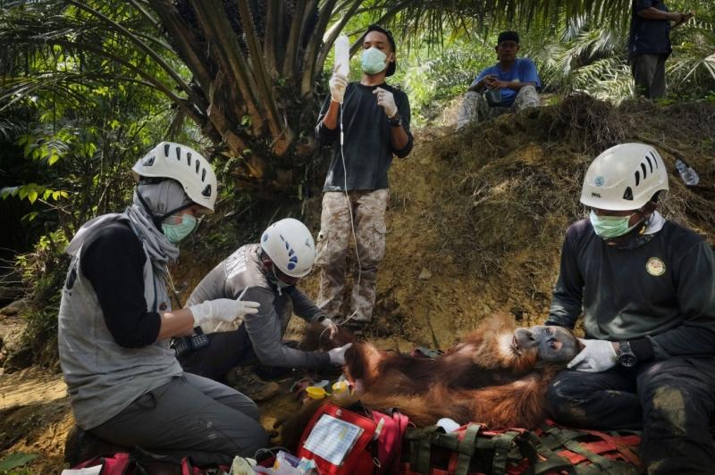 Saving Orangutans 2