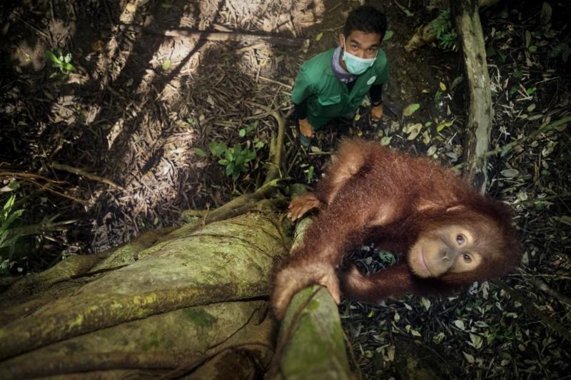 Saving Orangutans 8