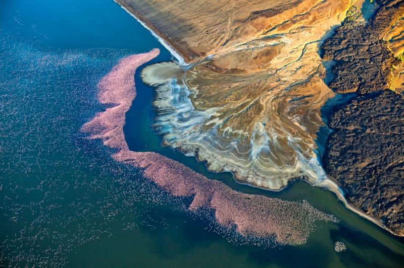 Flamingos at Lake Logipi