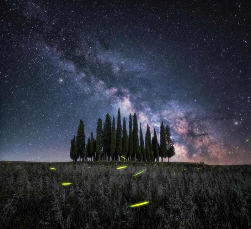 Lucciole sotto le stelle