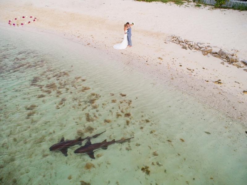 Los intrusos de la boda