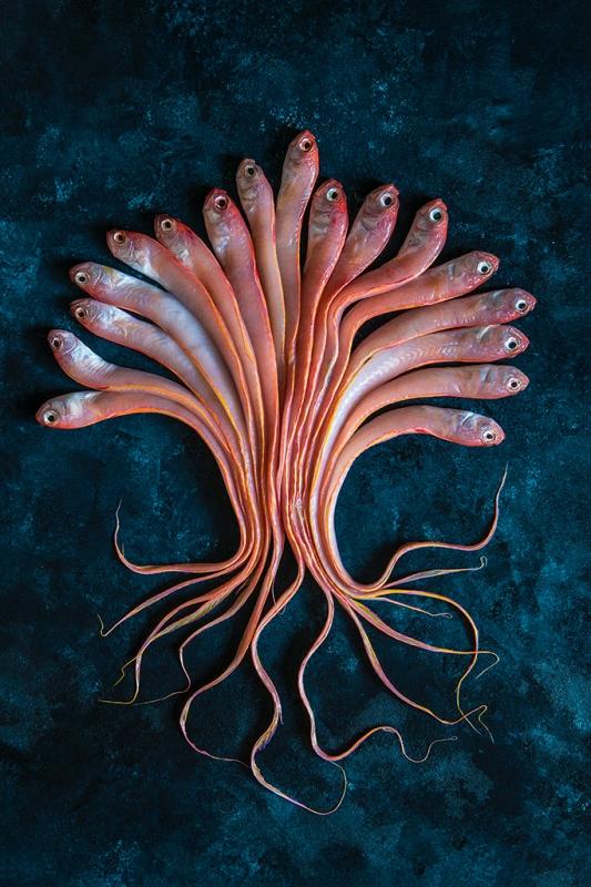 The Marine Tree of Life