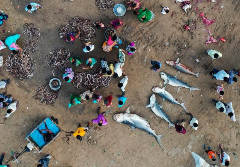 The Fallen Sharks