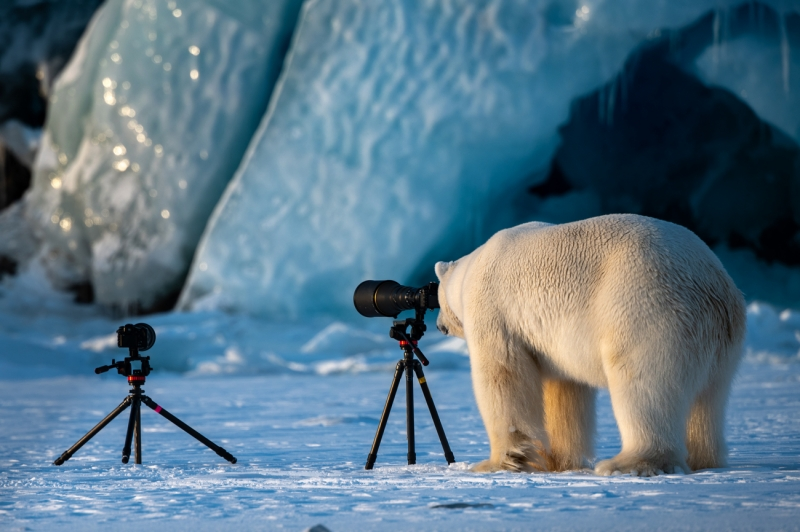 Polar Bear Changing Careers